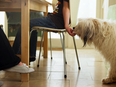 pg ways pets make you healthy 11 full 11 Ways Pets Make You Healthy