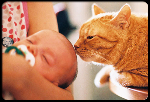 27 ways pets can improve your health s12 cat with baby 27 Ways Pets Can Improve Your Health