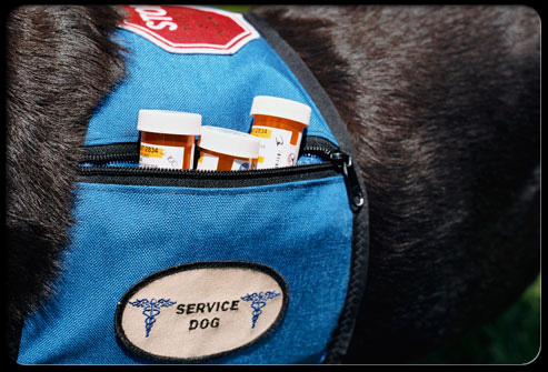 A service dog wearing a pill backpack