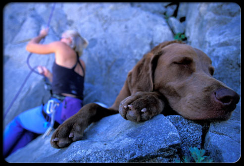 27 ways pets can improve your health s4 dog resting on rocks 27 Ways Pets Can Improve Your Health