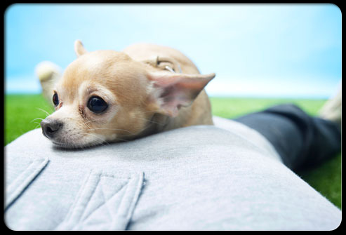 27 ways pets can improve your health s5 dog resting on guys chest 27 Ways Pets Can Improve Your Health