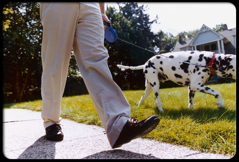 A man walking his dalmation dog