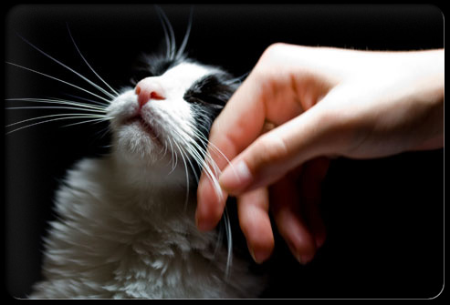 27 ways pets can improve your health s9 petting cat 27 Ways Pets Can Improve Your Health