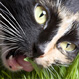featured pet health is my cat normal 27 Ways Pets Can Improve Your Health