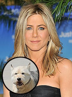 jennifer aniston 2 240 Jennifer Anistons Dog Norman Dies