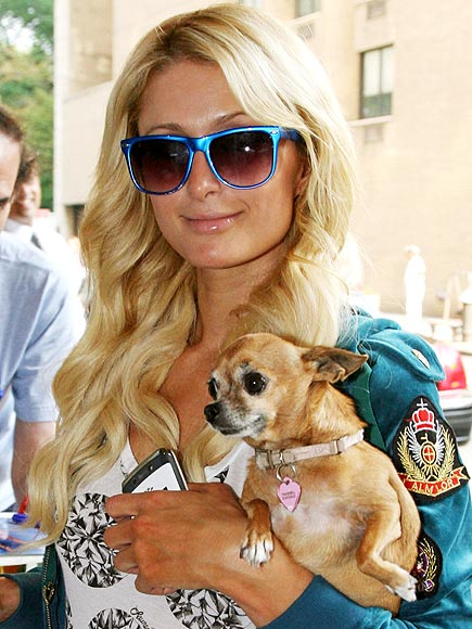 paris hilton 435 Star pets!