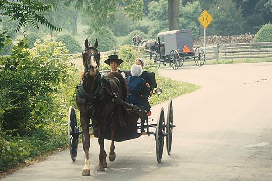 amishbuggy The Truth About AMISH COUNTRY