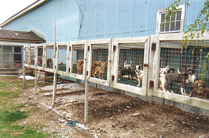 puppy mill The Truth About AMISH COUNTRY