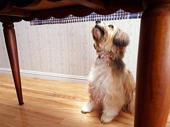 dog begging 199ds072810 10 Human Foods Dogs Can Eat