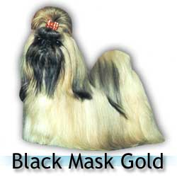 black mask gold Shih Tzu colors