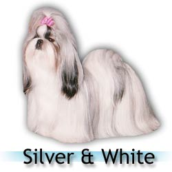 silver white Shih Tzu colors