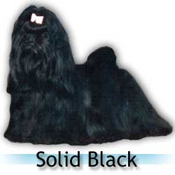 solid black Shih Tzu colors