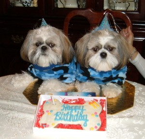 Dooney and Bourke Birthday lmao1 300x287 Welcome