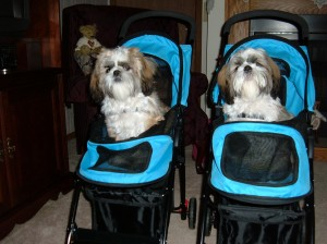 dooney and Bourke stroller3 300x224  Happy Shih Tzu puppy customers!!!
