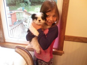 kelsey and Sammy 300x225  Happy Shih Tzu puppy customers!!!