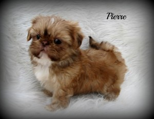 001 3 300x232 Puppies for sale page