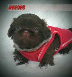 0619160933g 11 278x300 Puppies for sale page