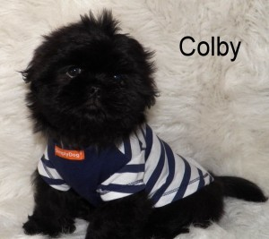 Colby1 Puppies for sale page