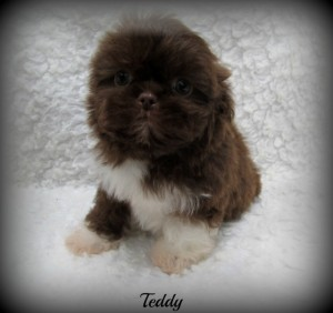 IMG 2959 300x282 Puppies for sale page