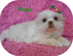 Maggie.jpg 001 300x231 Puppies for sale page