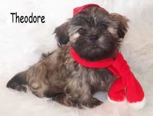 Theodore 51 300x227 Puppies for sale page