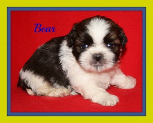 boy1 300x241 Puppies for sale page