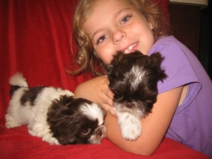 fudgey n Coco 012 300x225 Puppies for sale page