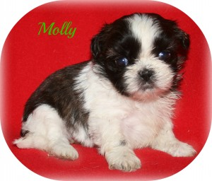 girl1 300x256 Puppies for sale page