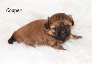 image1 15 300x209 Puppies for sale page