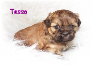 image1 16 300x213 Puppies for sale page