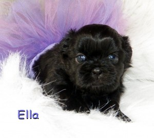 image1 17 300x269 Puppies for sale page