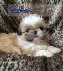 image16 266x300 Puppies for sale page