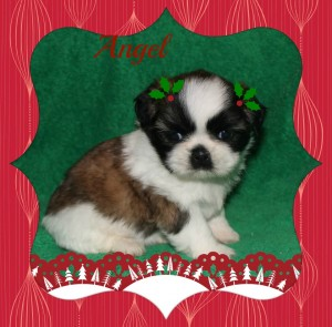 jpg1 300x295 Puppies for sale page