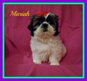 mariah1 300x280 Puppies for sale page
