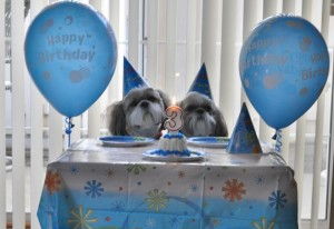Dooney n Bourkes 3 rd bday party lol 300x206 Welcome