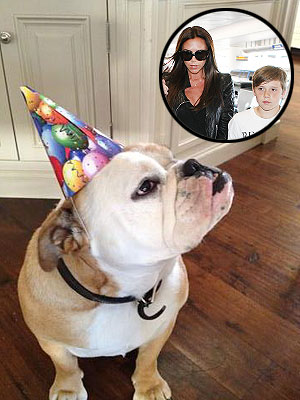 Victoria Beckham's Dog Celebrates Brooklyn's 13th Birthday | Victoria Beckham